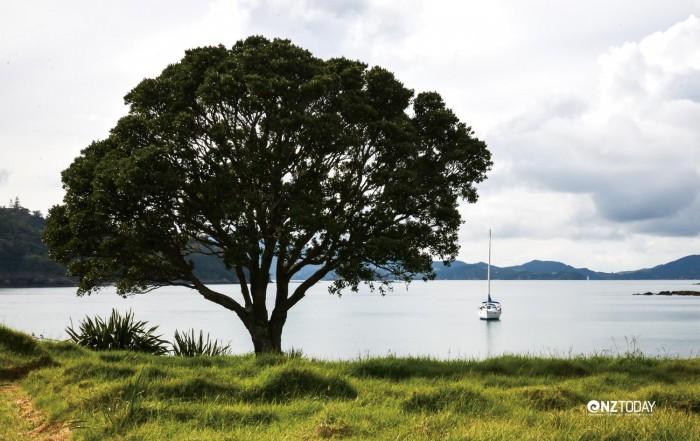 Waiwhapuku Bay, at Moturua Island