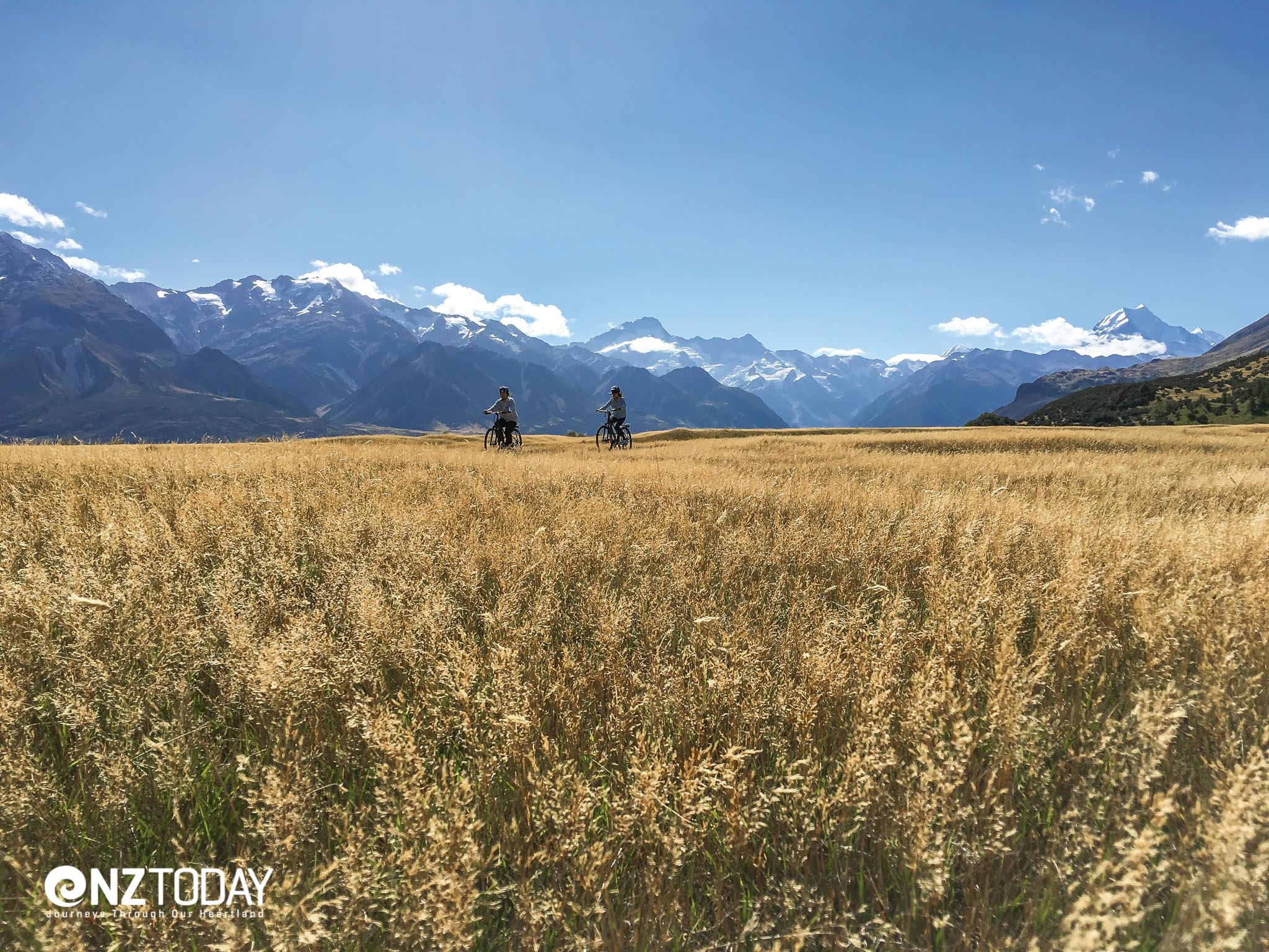 Cycling through golden fields - near Jollie carpark, Aoraki/Mt Cook in the background