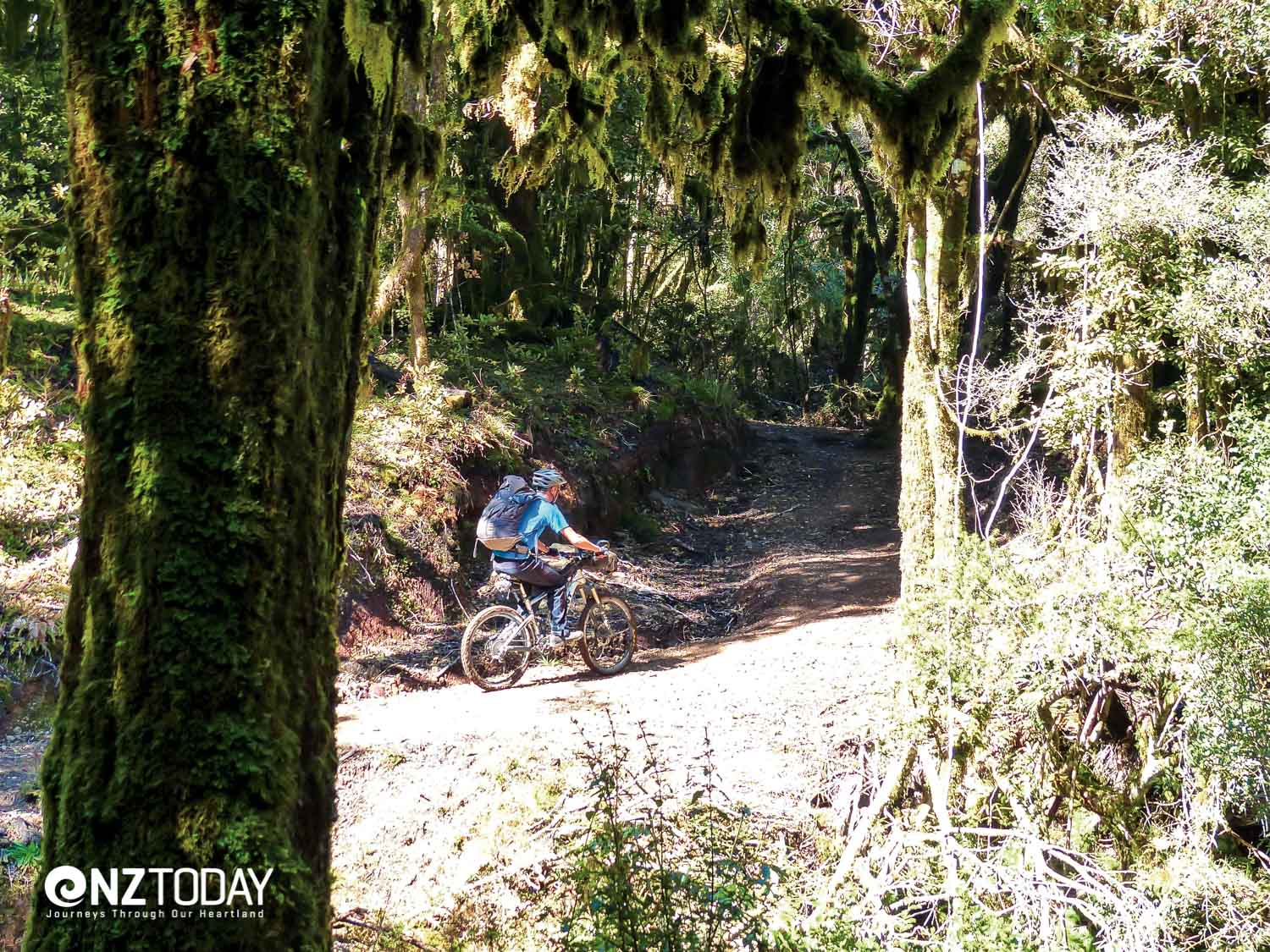 Riding into the cloud forest, its contorted branches draped in haunting moss