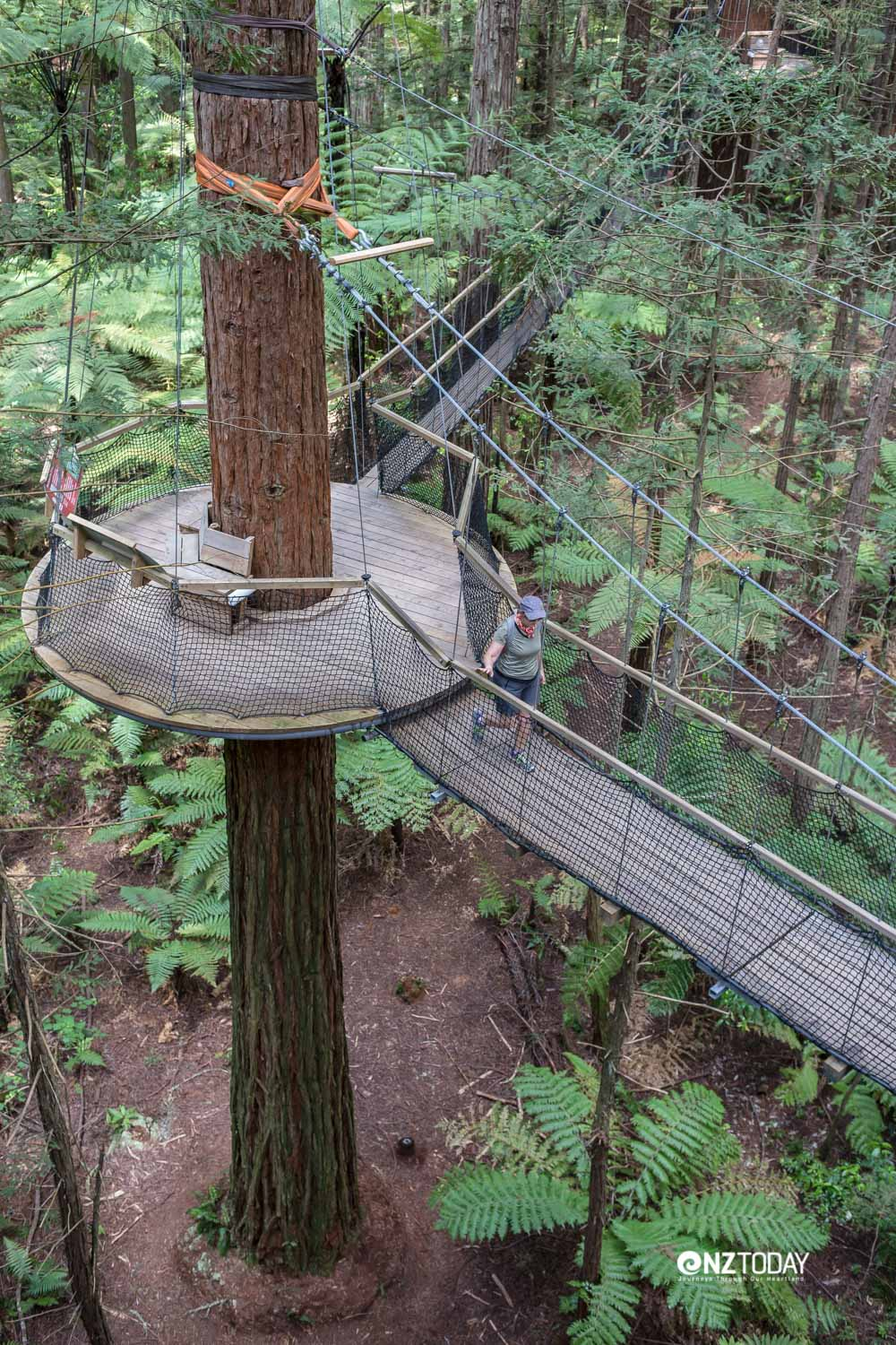 The top of the treewalk looks down from 12 metres