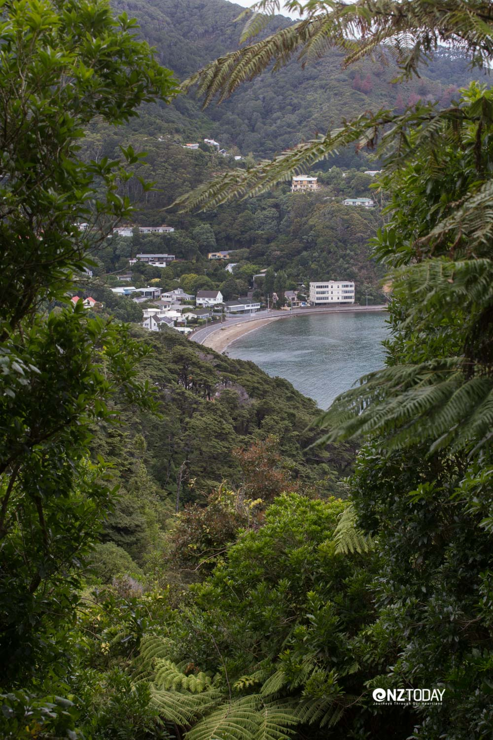 Forest walks lead down to Lowry Bay
