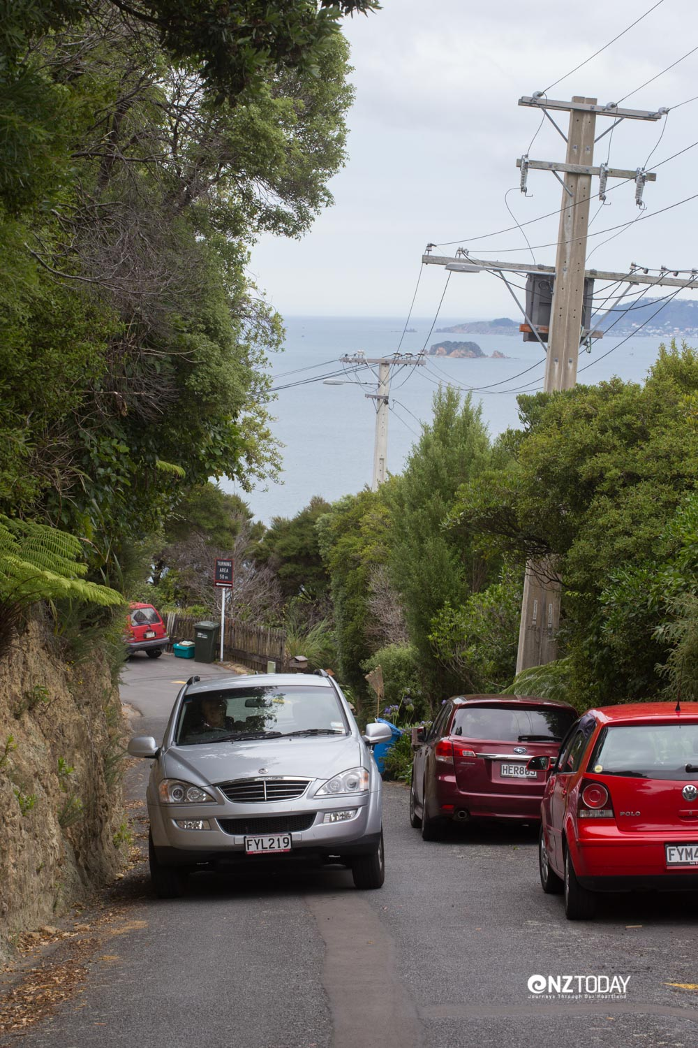 Typical Wellington road, narrow and winding