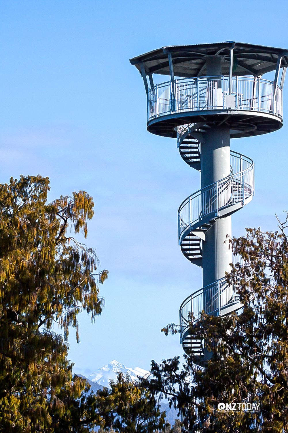 The tower viewpoint above the treetops is magnificent (Credit: West Coast Treetop Walkway)