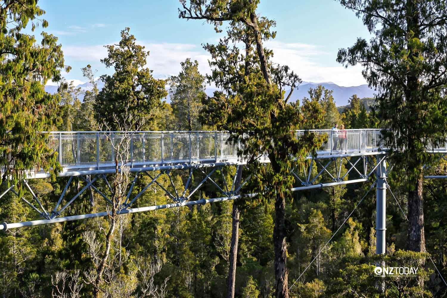 The easiest way to appreciate the canopy tops (Credit: West Coast Treetop Walkway)