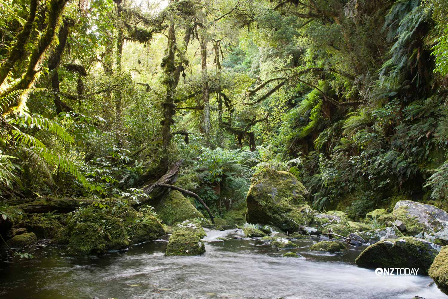 A rainforest garden surrounds the Tautuku River near the McLean Falls