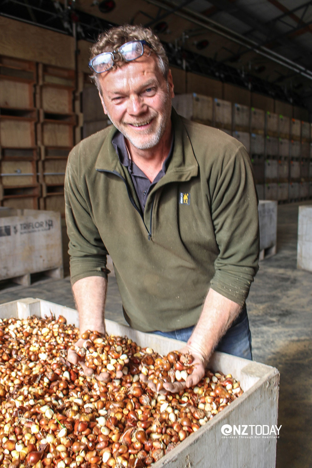 Eric the 'Bulb Man' at the Triflora plant with a couple of handfuls of tulip bulbs bound for export