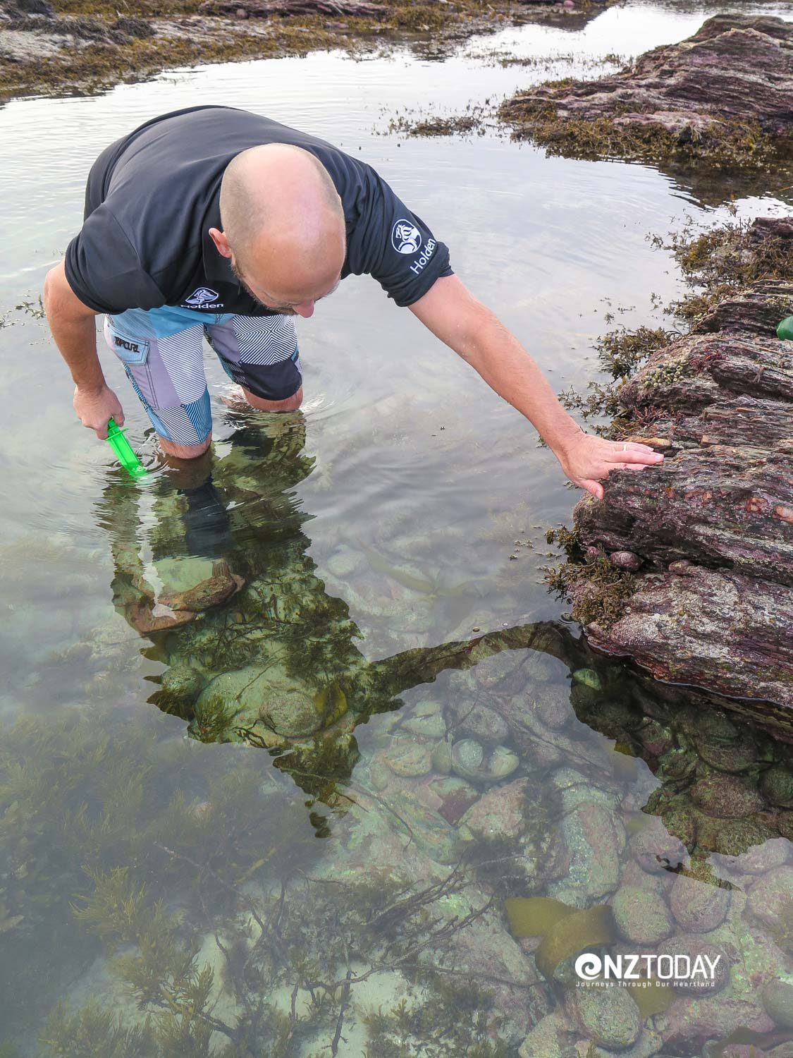 Several sea reserves allow fishing for consumption - and paua can be taken in knee deep water